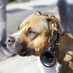 No more woof, tu perro te habla