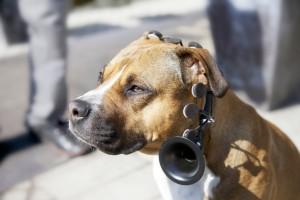 collar para saber por qué ladra tu perro no more woof